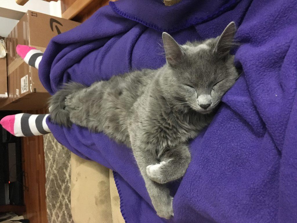 zoey cat on my lap